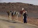 Camels-At-Tassili-nAjjer-Algeria-1600x1200