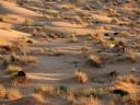 Hassi-Messaoud-_Sahara-Desert