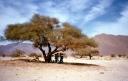 Mountains-trees-Tamanrasset-province-Algeria