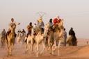 Ouarla Camel Race in Algeria
