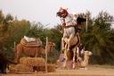 Arabian-horse_hires