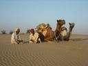 Arabian_Camels