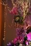 Bride groom bridal moroccan