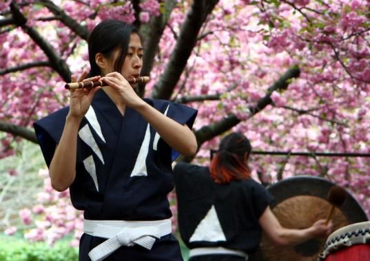 BBG-Cherry-Blossom-Festival-paul-stein-1-537x379