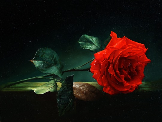 Vermeil_rose