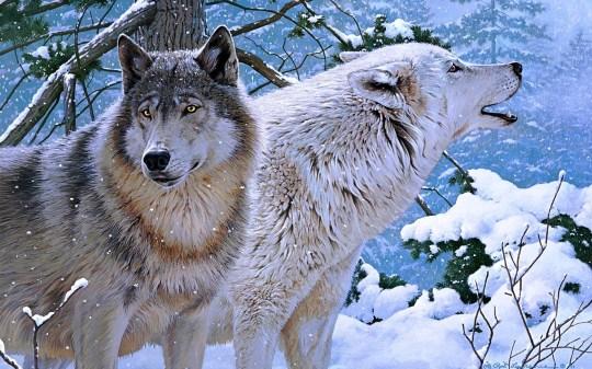 volki_zima_zhivopis