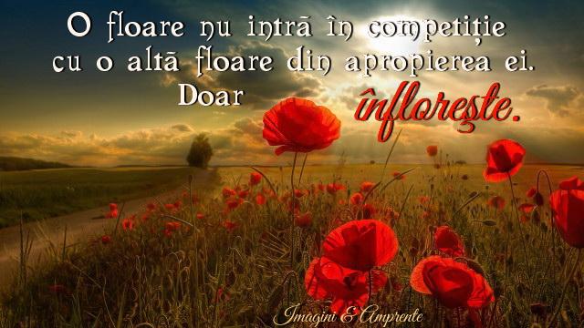 Citate De Spre Fotografie : Intre flori nu există competiţie strop de lumina