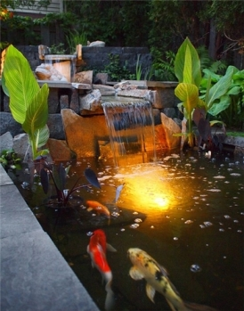 canna-lilies-koi-switzer-s-nursery-and-landscaping_4249